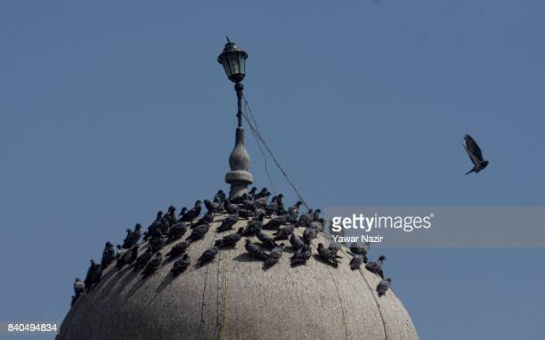 Pigeons rest on the dome of the entrance of the shrine of Khaniqahi mullah during a festival on August 29 2017 in Srinagar the summer capital of...
