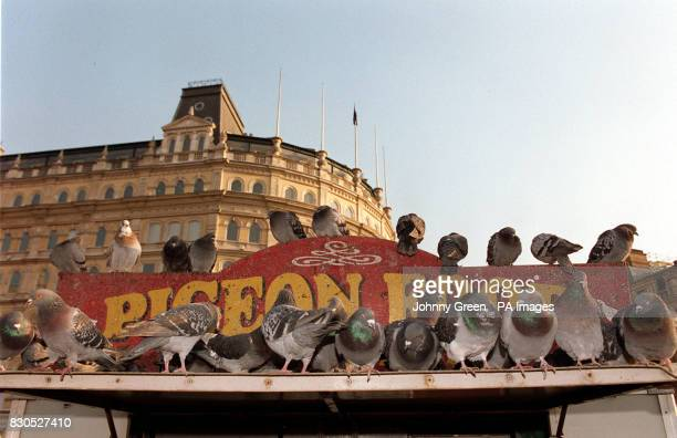 Pigeons roost on top of Rayner's bird seed stall in Trafalgar Square central London The last pigeon feed seller in Trafalgar Square is to be stripped...