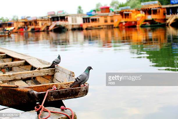 Pigeons Sitting on a Boat