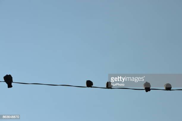 Pigeons stand on a wire in the historic Ulus district of Ankara Turkey on October 20 2017