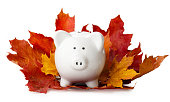 piggy bank in autumn leaves isolated on a white background