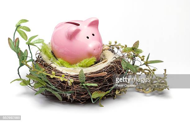 Piggy bank nest egg