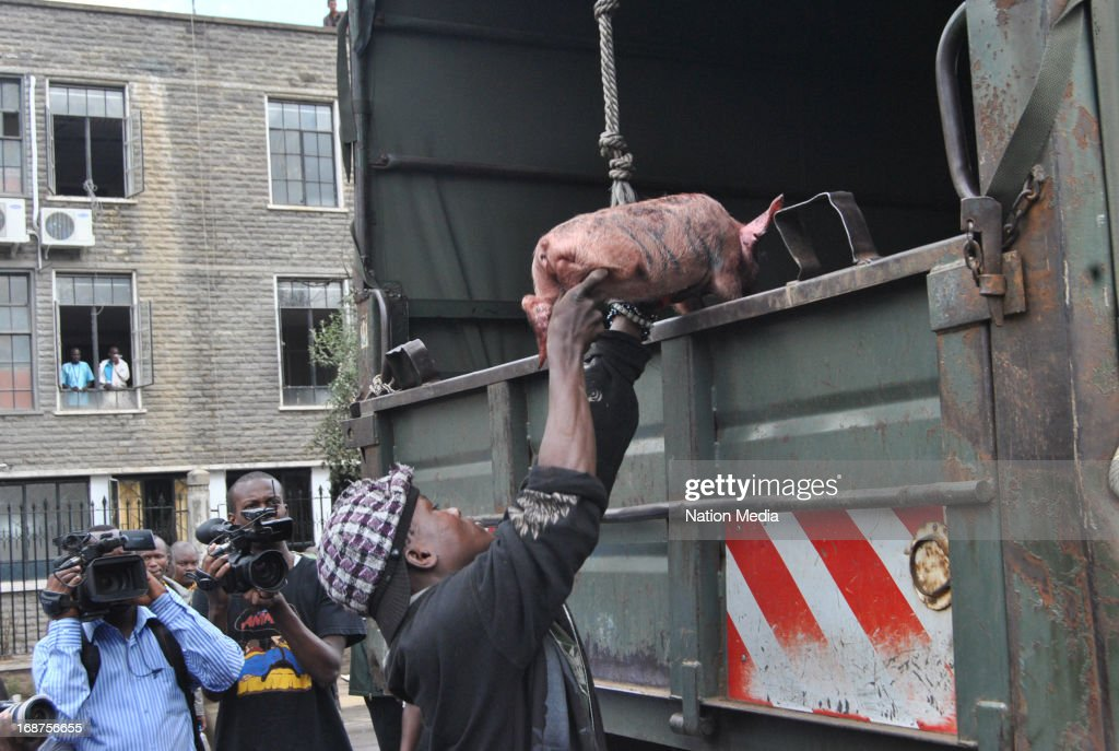 A piglet used in a protest is loaded onto a police lorry outside parliament on May 14, 2013 in Nairobi, Kenya. The protesters released a pig and about a dozen piglets outside parliament to show their anger at newly elected MPs demanding higher salaries. The protest was intended to portray the MPs as greedy.