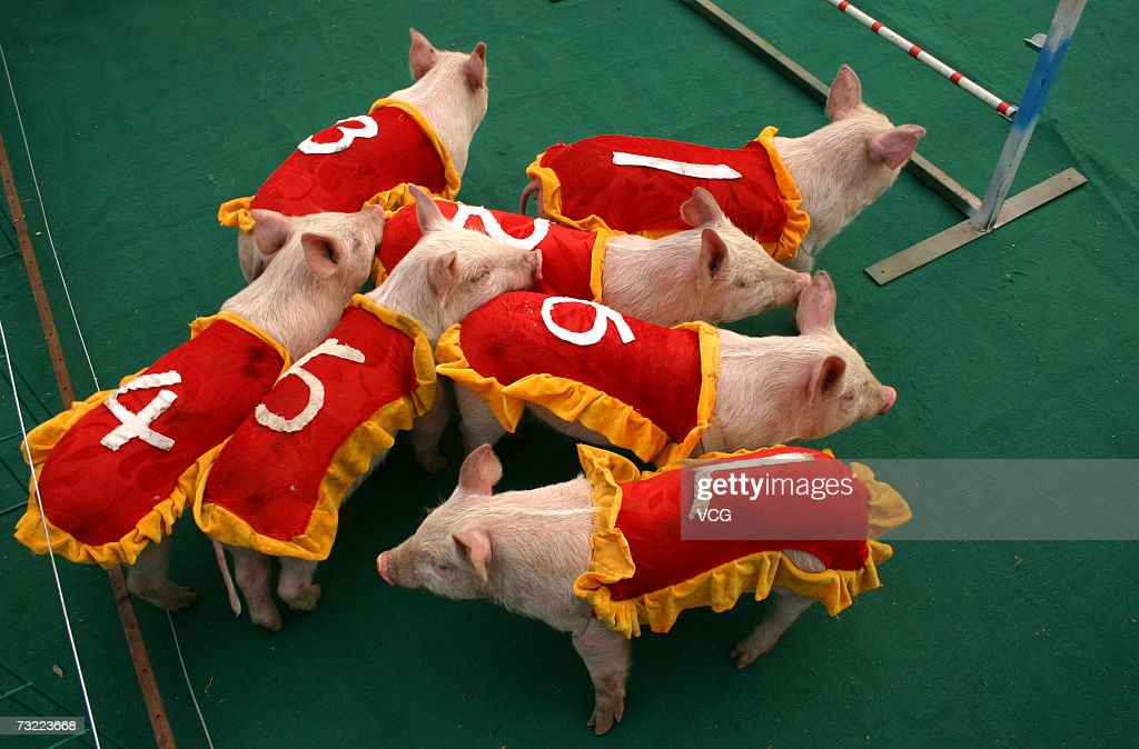 Animal Races | Getty Images