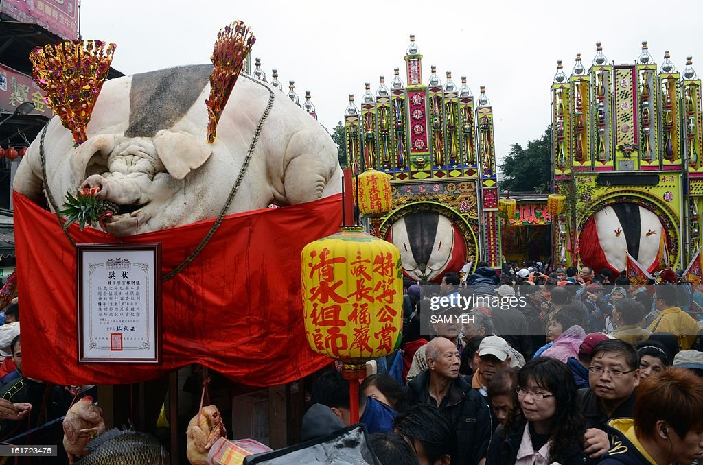 Pigs, manipulated to increase the appearance of their size, are displayed during the controversial Pig of God festival outside a Taoist temple in Shanhsia, the New Taipei city on February 15, 2013. Thousands of local residents surrounded a displayed of pigs to mark the annual Lunar New Year during the pigs god competition with the heaviest pig being 981.6-kilogram. AFP PHOTO / Sam YEH