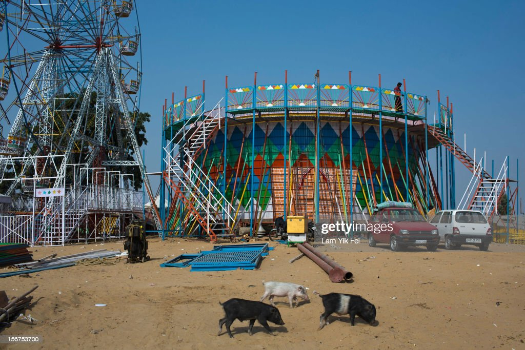 Pigs walk past the carnival games that were set up for a camel fair on November 20, 2012 in Pushkar, India. The annual camel and livestock fair is held over five days, and attracts thousands of tourists.