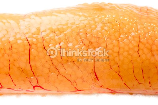 Pike Roe With White Background Stock Photo | Thinkstock