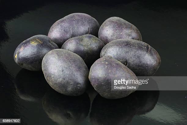 Pile of Adirondack Blue Potatoes (Solanum tuberosum)