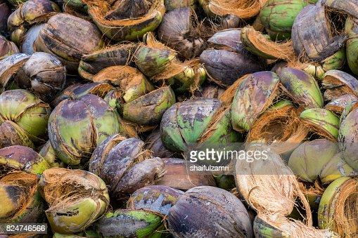 Pile of coconut coir : Stock Photo