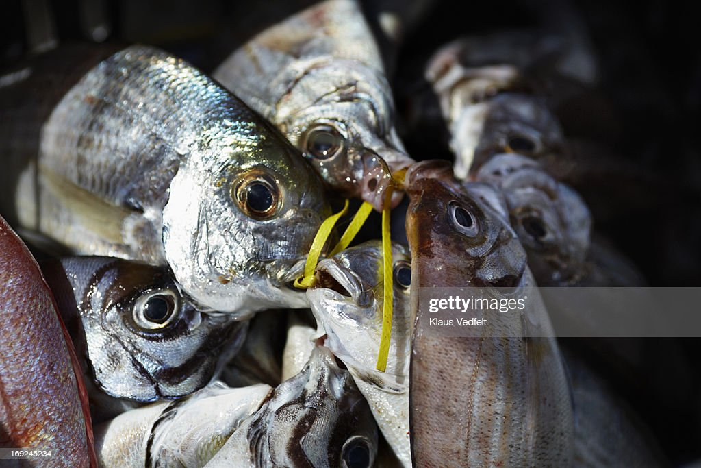 Pile of fish at fish market : Stock Photo