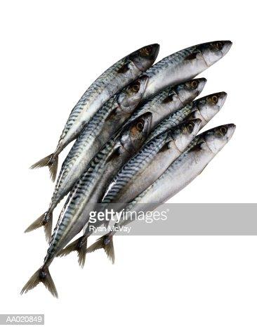 Pile of Fish : Bildbanksbilder