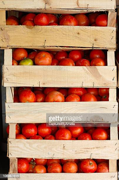 Pile of fresh tomatoes on crates