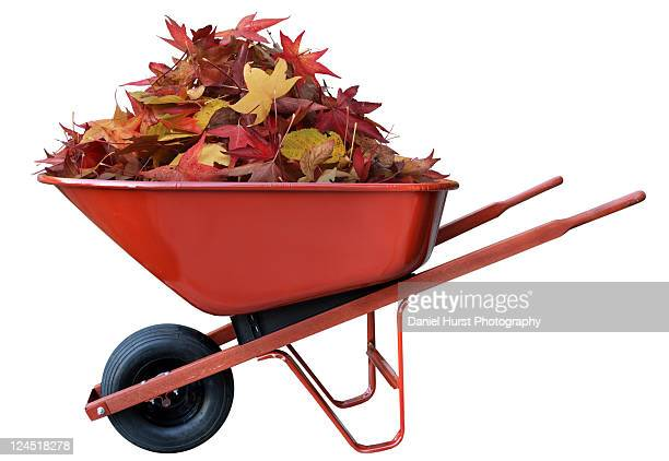 Pile of leaves in a wheel barrow
