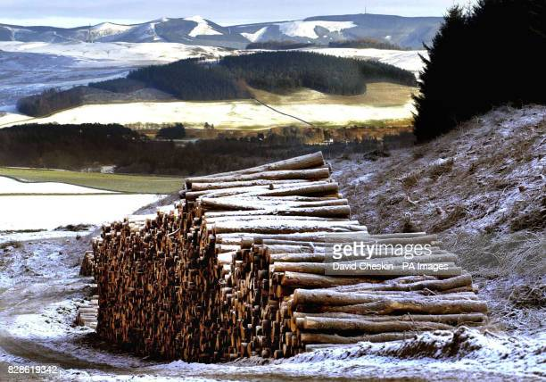 A pile of logs taken from a forest in the Scottish Borders Scotland is the most wooded area in the UK and one of the fastest expanding areas of...