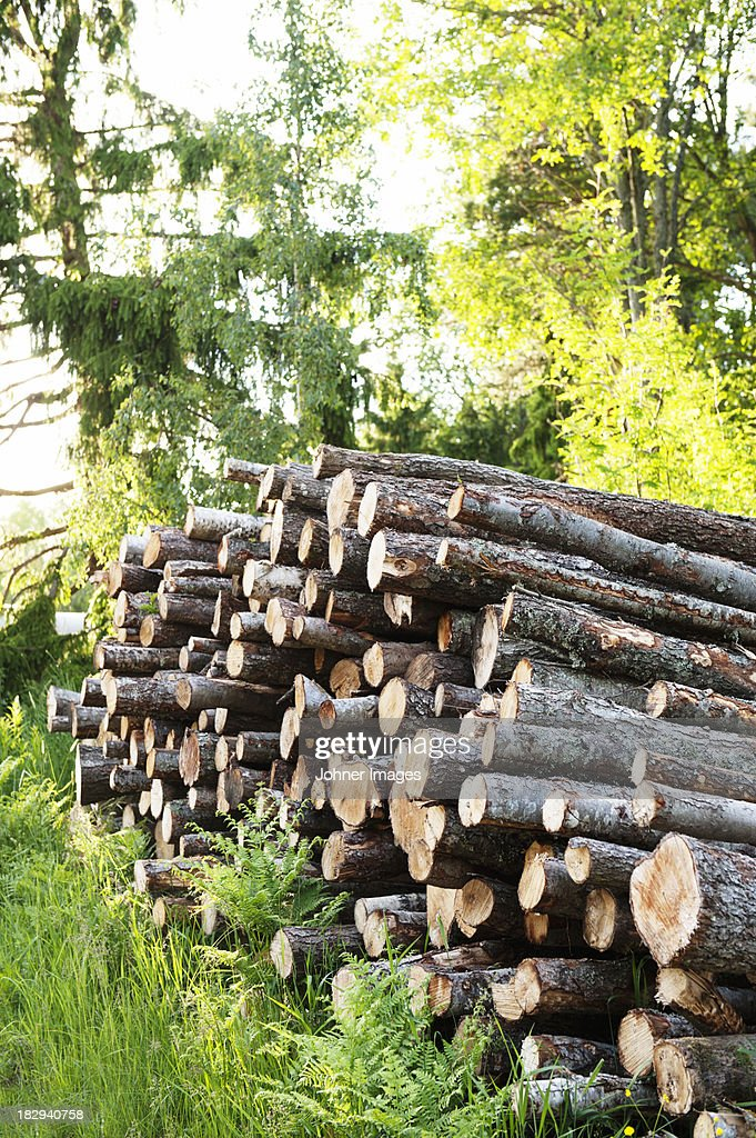 Pile of lumber in forest stock photo getty images