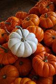 Pile of mini pumpkins white and orange