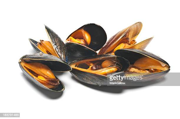 A pile of mussels on a white background