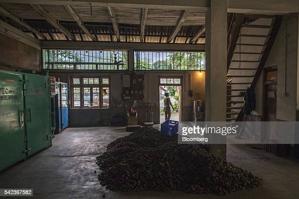 A pile of organic ginger lies on a warehouse floor after being sorted at the Nature's Gift processing plant in Rangpo East Sikkim India on Thursday...