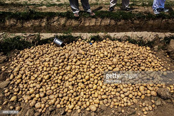 A pile of potatoes wait to be sorted at a farm on the outskirts of Meerut Uttar Pradesh India on Monday April 14 2014 Indias consumerprice inflation...