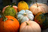 Pile of Pumpkins! These ripe, plump beauties were perfect for the picking. Royalty free stock image.