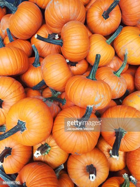 A pile of pumpkins