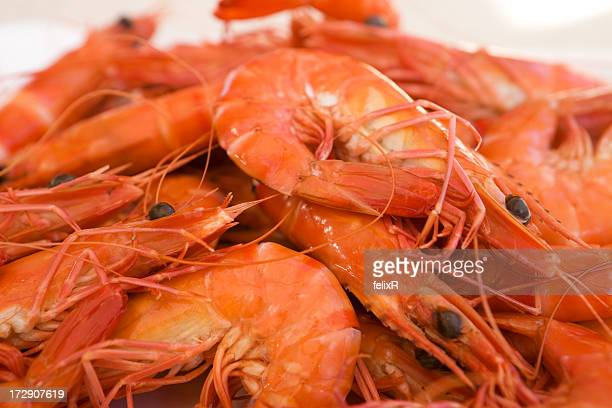 Pile of red prawns that were freshly caught
