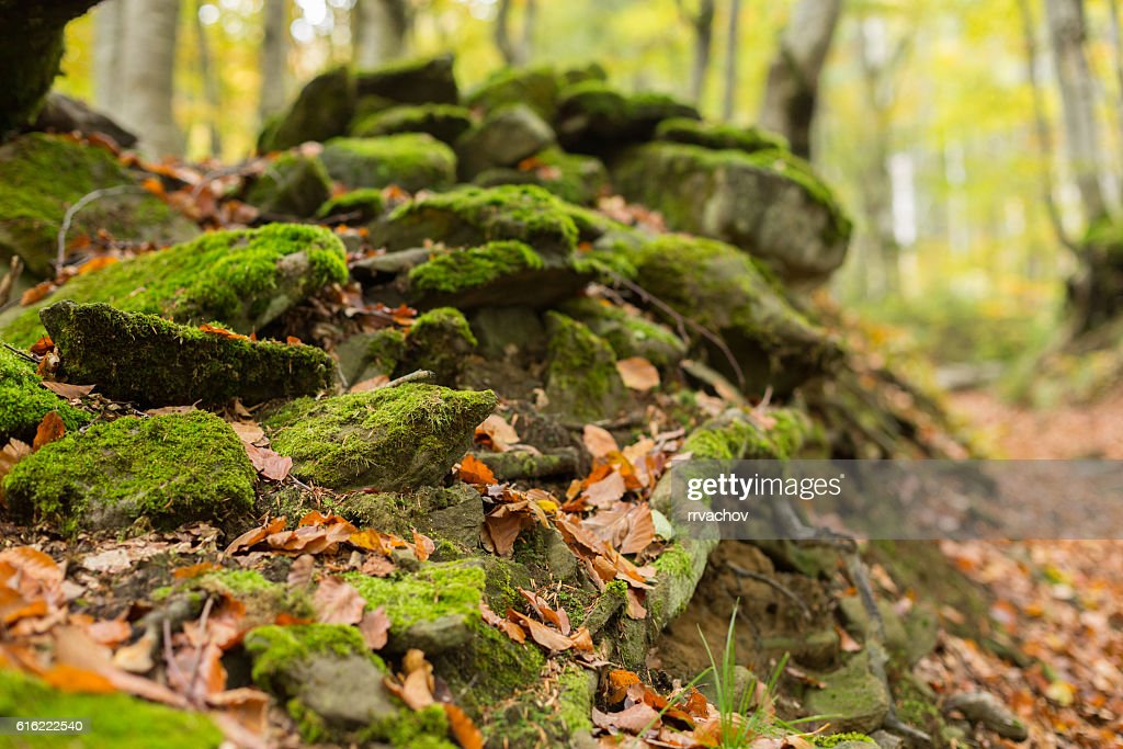 Pile of stones covered with moss : Stockfoto