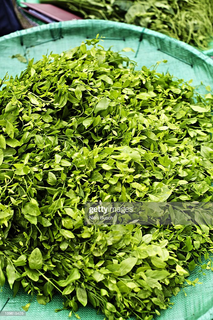 Pile of sweet leaf bush at market : Stock Photo