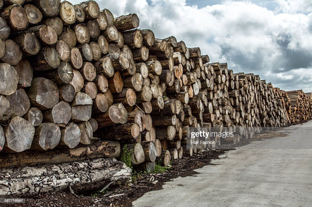 Pile Of Timber : Pile of timber logs stock photo getty images