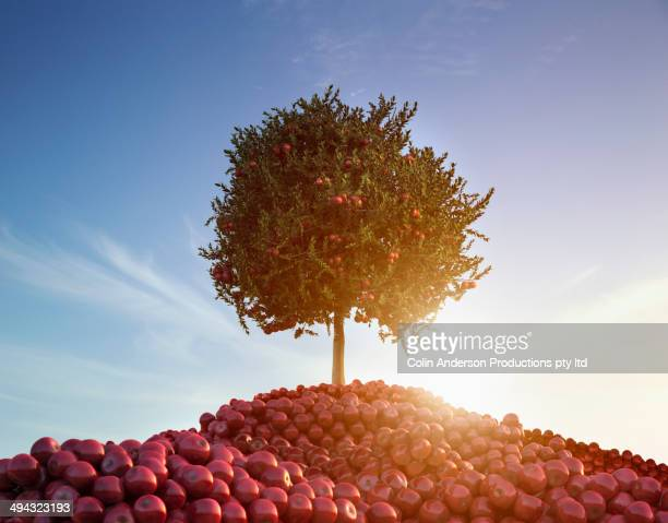 Piles of apples under tree outdoors