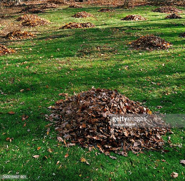 Piles of dead leaves dotted across grass