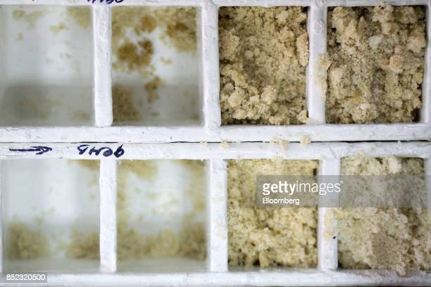 Piles of graded refined sugar sits in boxes at a lab inside the EDF Man Ltd refinery in Nikolaev Ukraine on Friday Sept 22 2017 More sugar is coming...