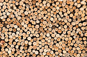 Stacked timber logs as background, Pile of wood logs. Wooden logs texture.