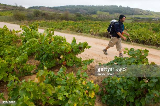 A pilgrim from Italy with the bag and the yellow arrow in a Bierzo region of wines in the way of saint James in Castilla and Leon 11th November 2009