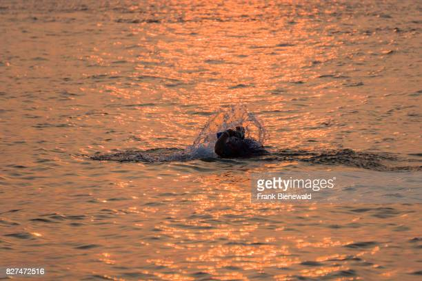 A pilgrim is praying in the water at Ganga Sagar at sunset celebrating Maghi Purnima festival