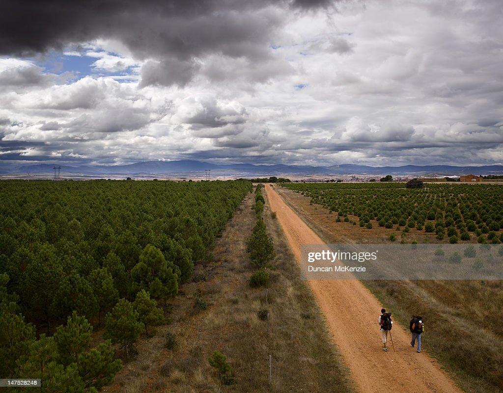 Pilgrim trekkers walking the Camino Santiago