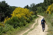 Pilgrim walking to Compostela on the french Way of St James (Camino de Santiago), near O Cebreiro, Galicia, Spain