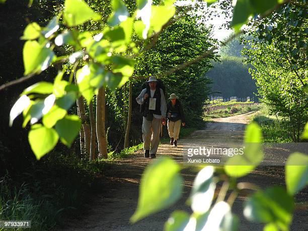Pilgrim walks among the forest in the region of Bierzo way of saint James Castilla y Leon region16th April 2004