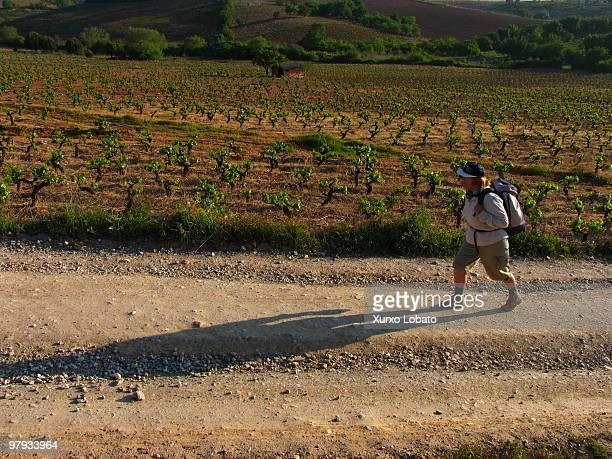 Pilgrim walks among the vineyards in the region of Bierzo way of saint James Castilla y Leon region16th April 2004