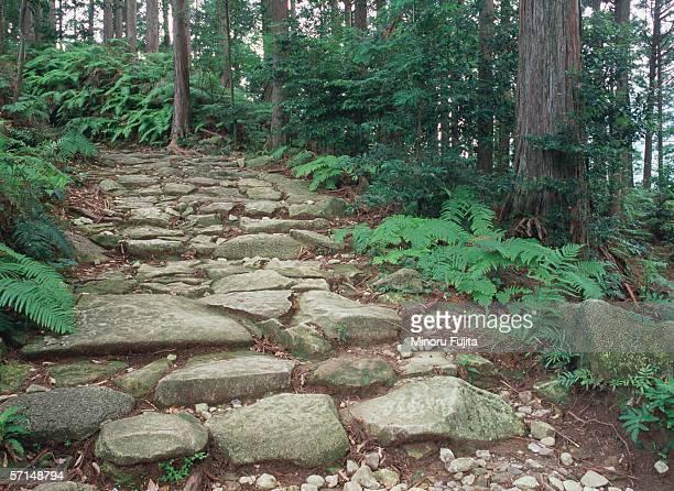 Pilgrimage route in Kumano