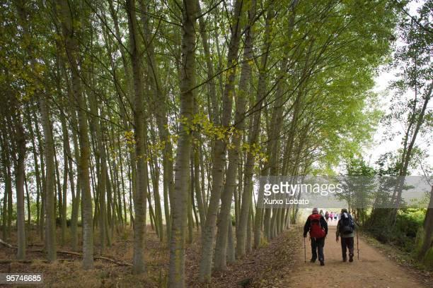 Pilgrims on the road to Santiago de Compostela way of Saint James walking in a tree birch forest en the region The Bierzo 11th October 2009