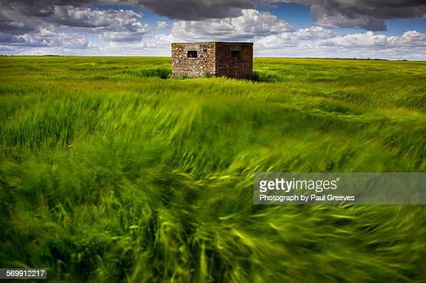 Pill box in barley field