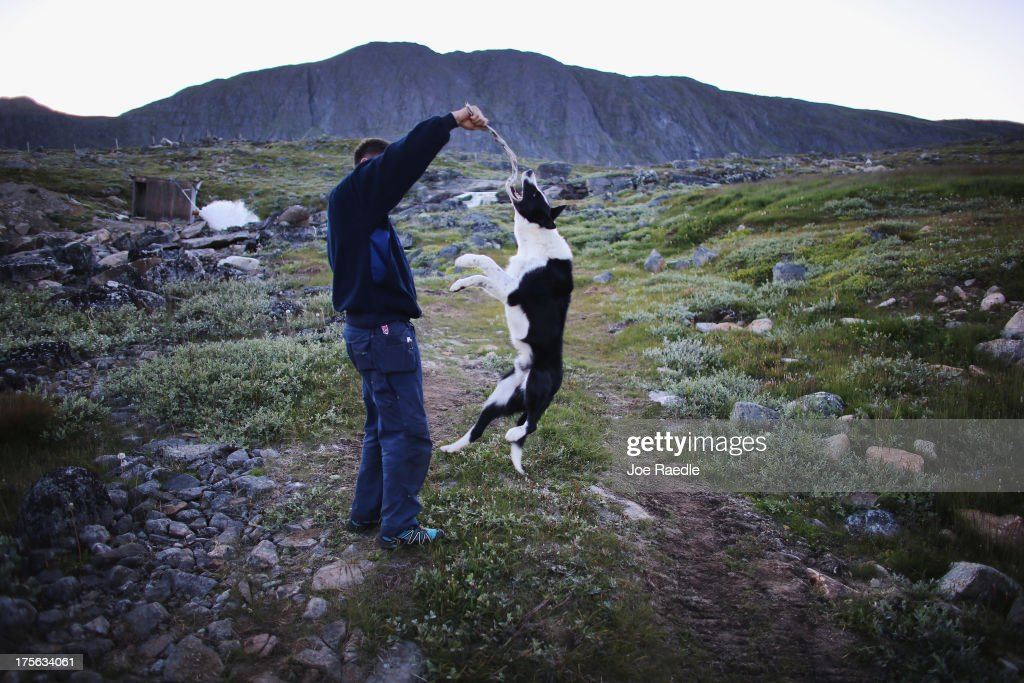 Pilu Nielsen plays with one of his dogs on the families potato and sheep farm on July 30, 2013 in Qaqortoq, Greenland. Even though this summer has not been as warm as last year, the climate change has extended crop growing season. As cities like Miami, New York and other vulnerable spots around the world strategize about how to respond to climate change, many Greenlanders simply do what theyve always done: adapt. 'Were used to change, said Greenlander Pilu Neilsen. 'We learn to adapt to whatever comes. If all the glaciers melt, well just get more land.