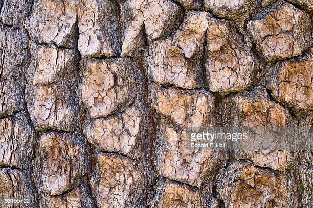 Pine Bark Closeup