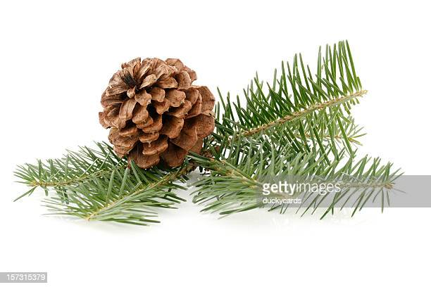 Pine Cone & Needles