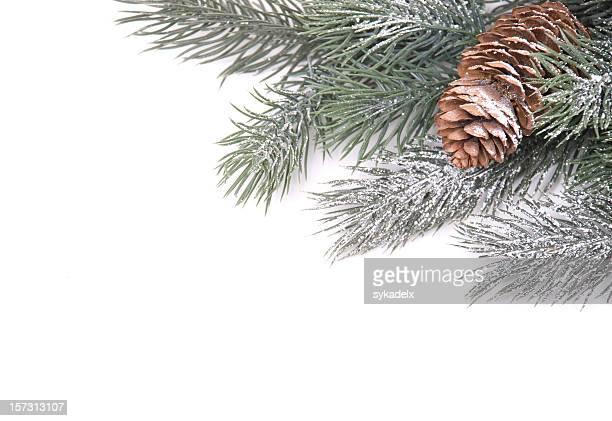 Pine Cone Grenze