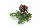 Pine Cone On White, close up of christmas decoration on white background