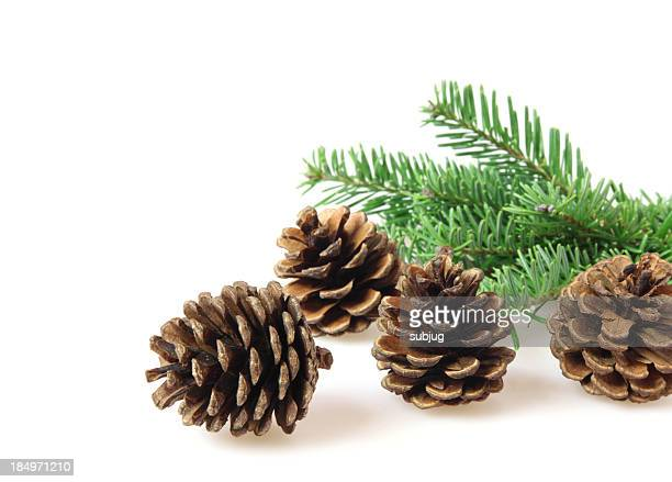 Pine cones and branch