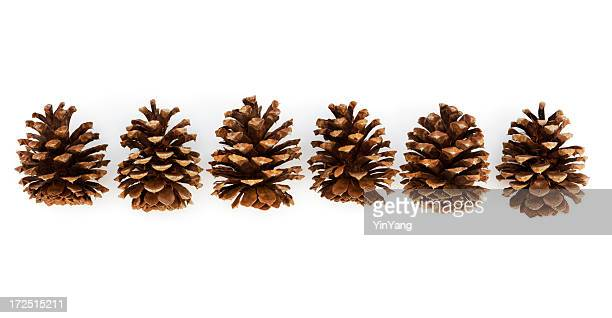 Pine Cones in Row
