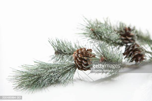 Pine cones on artificial pine branch with ice